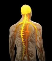 nervous system shot from video, Dyslexia Treatments, ADHD Treatments, Dyslexia Symptoms, Chiropractor, Austin