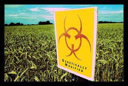 GMO_Crops